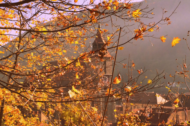 Transilvania; Stelle e fogliecadenti